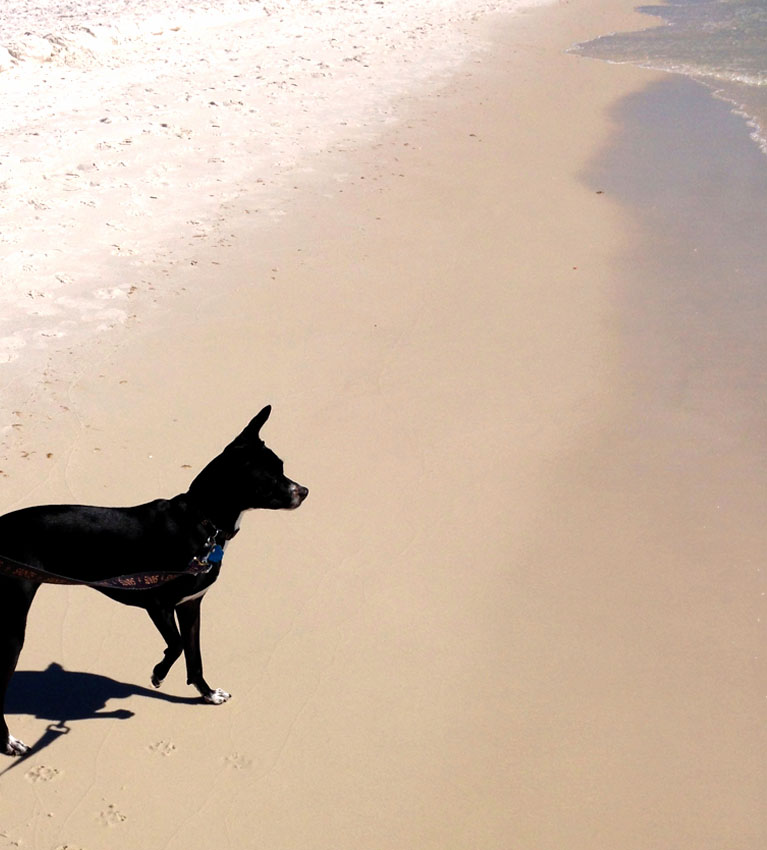 4 places to vacation with your dog on the Gulf Coast Southeast Louisiana